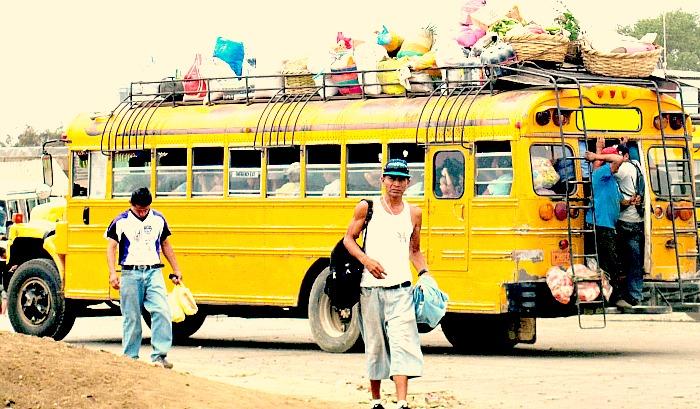chickensbus (1).jpg